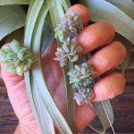 La última tendencia en manicura: uñas-planta