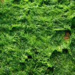 Los beneficios de los cosméticos con algas